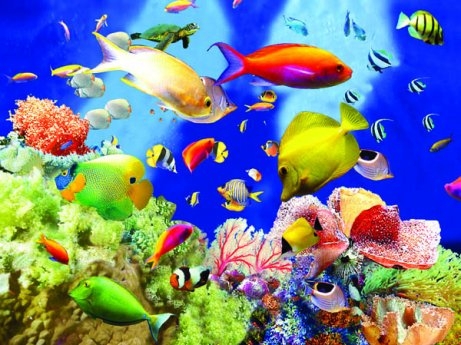3D Picture 48-- Tropical Fish with Coral  - <b>Assorted Colors.</b>