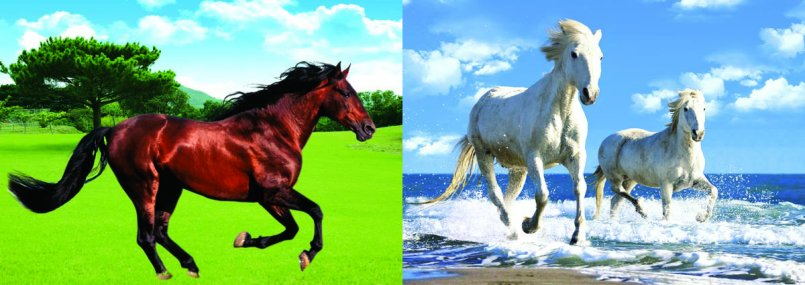 """3D Picture 80--Two White Horses/Brown Horse  - Approx size: 13.5""""x9.75"""""""