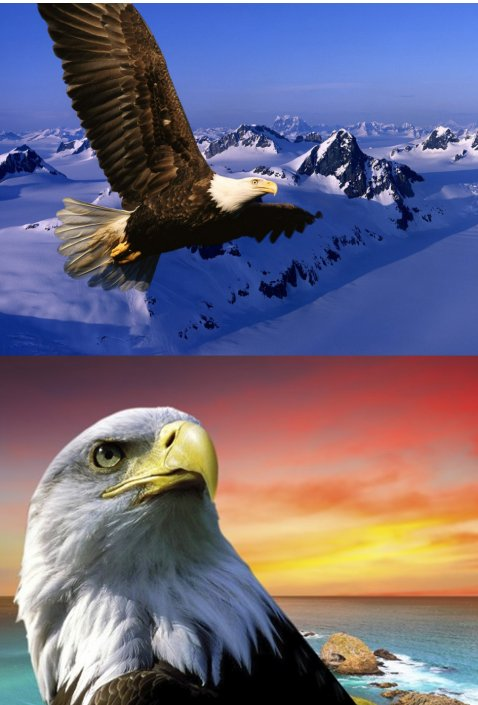 """3D Picture 9609--Flying Eagle/Eagle Head  - Approx size: 13.5""""x9.75"""""""