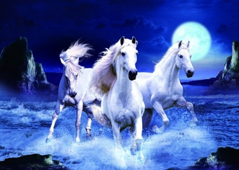 3D Picture 64--Three White Horses