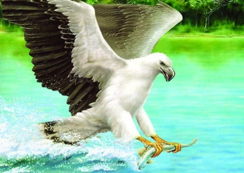 3D Picture 68--Eagle Catching Fish