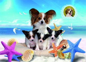 3D Picture 92--Puppies on Beach