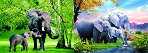 3D Picture 81--Three Elephants/Two Elephants