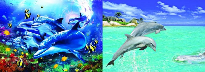 3D Picture 56--Jumping Dolphins/Swimming Dolphins