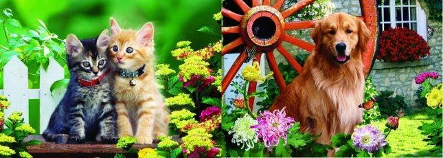 3D Picture 86--Retriever/ Two Kittens