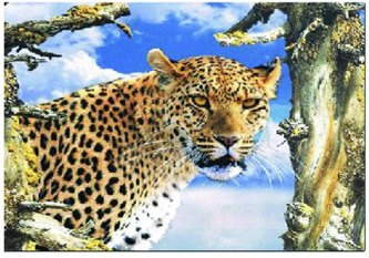 3D Picture 21--Cheetah Head