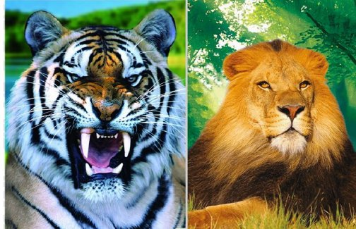 3D Picture 17--Lion/Tiger