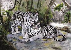 3D Picture 9611--2 White Tigers