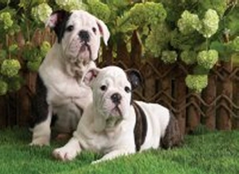 3D Picture 94--Black & White Dogs