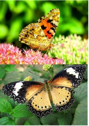 3D Picture 9605--Butterflies