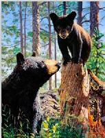 3D Picture 9613--Mama Bear & Baby Bear