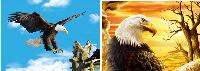 3D Picture 9633--Flying Eagle/Bald Eagle