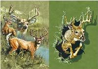 3D Picture 9713--3 Bucks/1 Buck