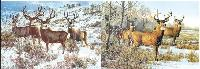 3D Picture 9714--Snowy Bucks