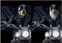 3D Picture 9728--Biker Bulldog/Biker Eagle